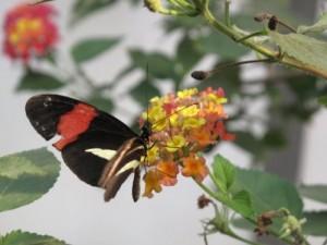 Butterfly - ReemaFaris.com